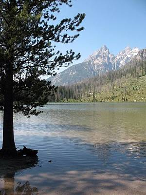 Poster featuring the photograph Jenny Lake And The Beauty Of The Grand Tetons by Shawn Hughes