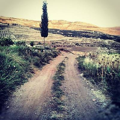 #jo #jordan #amman #nature #green #road Poster