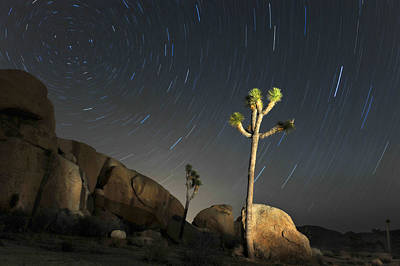 Joshua Tree Star Trails Poster by Dung Ma