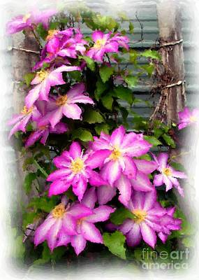 Joy Clematis Poster by Susan Fisher