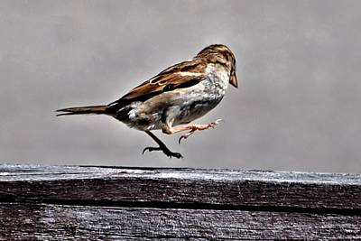 Jumping Sparrow Poster by Don Mann