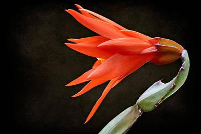 Just Flower V Poster
