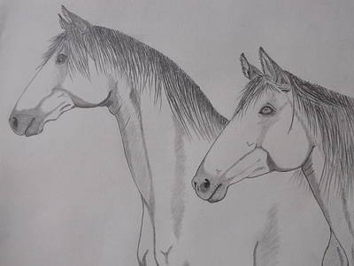Poster featuring the drawing Keiger Mustangs by Gerald Strine
