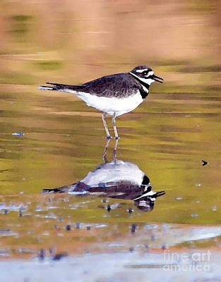 Killdeer Reflection Poster by Betty LaRue