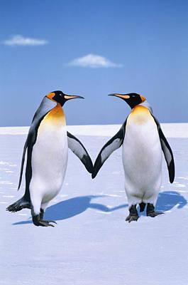 King Penguins (aptenodytes Patagonicus) (digital Composite) Poster by Johnny Johnson