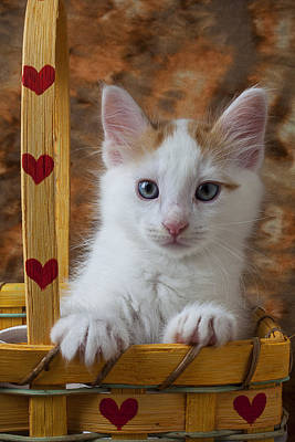 Kitten In Basket With Hearts Poster