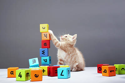 Kitten Playing With Building Blocks Poster