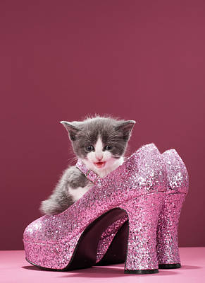 Kitten Sitting In Glitter Shoes Poster by Martin Poole