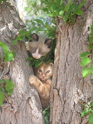Kittens On A Tree Poster by Michaline  Bak