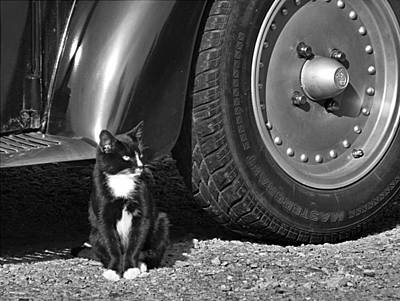 Kitties And Wheels In Black And White Poster by Kathy Clark