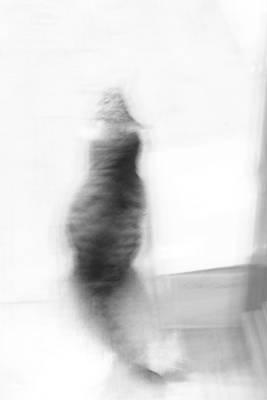 Kitty Poster by Nina Mirhabibi