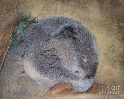 Koala Sleeping Poster by Betty LaRue