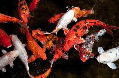 Koi Fish Movement Poster by Joe Carini - Printscapes