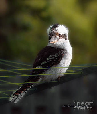 Poster featuring the photograph Kookaburra Hoists On The Hills by Vicki Ferrari