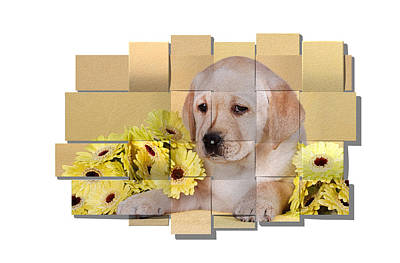 Labrador Puppy And Flowers Mesh Poster
