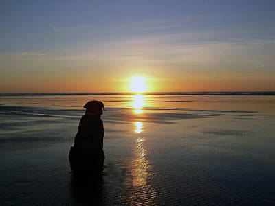 Labrador Watching The Sun Set Poster