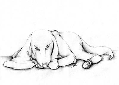 Lacy Dog Poster by Dumindu Shanaka