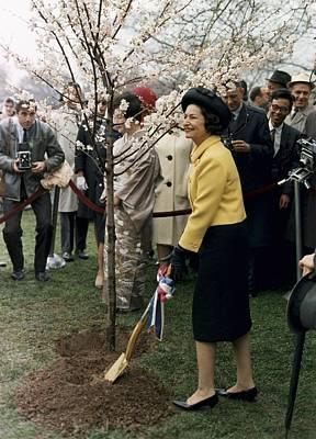 Lady Bird Johnson Planting A Tree Poster