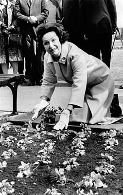 Lady Bird Johnson Planting Pansies Poster by Everett