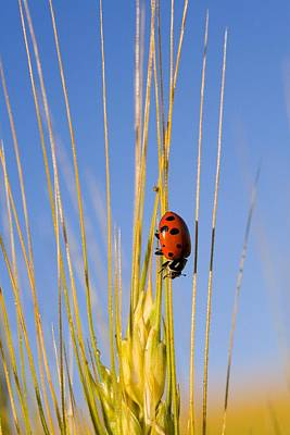 Lady Bug On A Plant Poster by Craig Tuttle