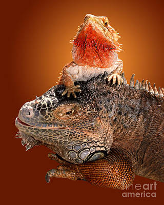 Lap Lizard Poster by Jim Carrell