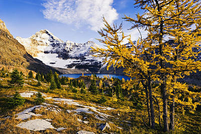 Larch Trees, Lake Mcarthur And Mount Poster