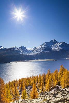 Larch Trees, Lake Sils And Piz De La Margna, Engadin, Canton Of Graubunden, Switzerland Poster