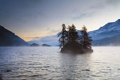 Larch Trees On Island In Lake Sils, Engadin, Switzerland Poster