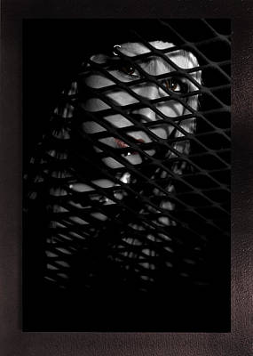 Lattice Poster by Swav Jusis