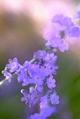 Lavender 3 Poster by Pamela Cooper