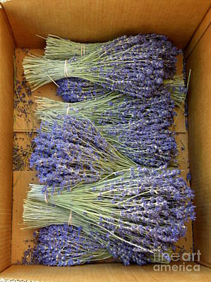 Lavender Bundles Poster by Lainie Wrightson