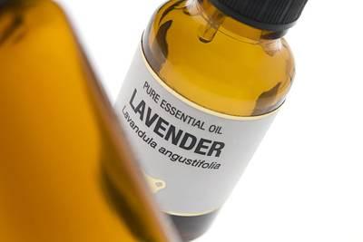Lavender Essential Oil Poster by Steve Horrell