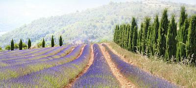 Lavender Fields, France Poster by Photo Charlotte Ségurel