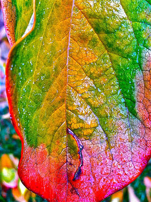 Leaf 2 Poster by Bill Owen