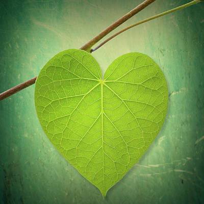 Leaf Green Heart Shaped Poster