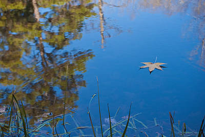 Leaf On Pond Poster by Jim  Arnold