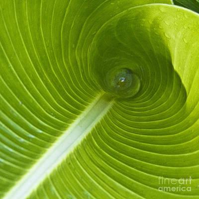 Leaf Tube Poster by Heiko Koehrer-Wagner