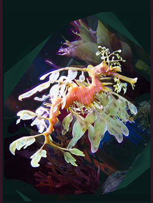 Poster featuring the photograph Leafy Sea Dragon by Ginny Schmidt