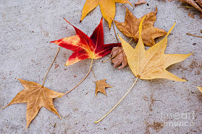 Leaves On The Sidewalk Poster