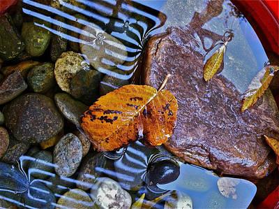 Leaves Rocks Shadows Poster by Bill Owen