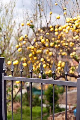 Lemon Gate Poster by Mike Reid