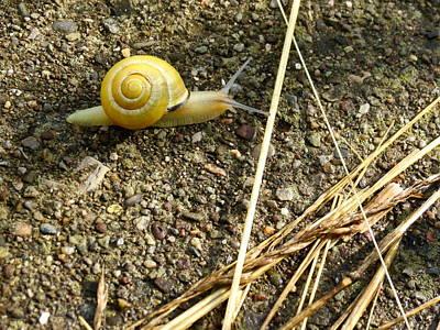 Lemon Snail Poster
