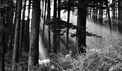 Poster featuring the photograph Light Through The Trees by Don Schwartz