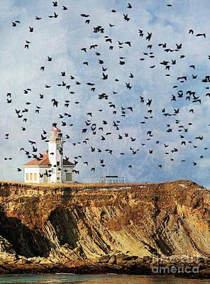 Lighthouse Birds  Poster