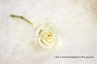 Like A Rose... Poster by Taschja Hattingh