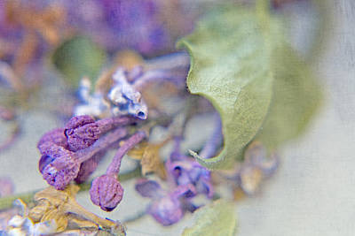 Lilacs In Macro Poster by Bonnie Bruno