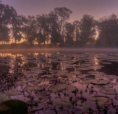 Poster featuring the photograph Lily Pads In The Fog by Dan Wells
