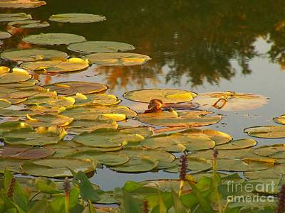 Lily Pads On The Water Poster by Joyce Kimble Smith