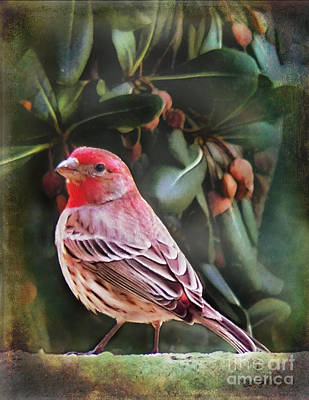 Little Bird Iv Poster by Rhonda Strickland