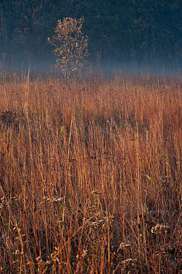 Little Bluestem Prairie Grass Poster by Steve Gadomski